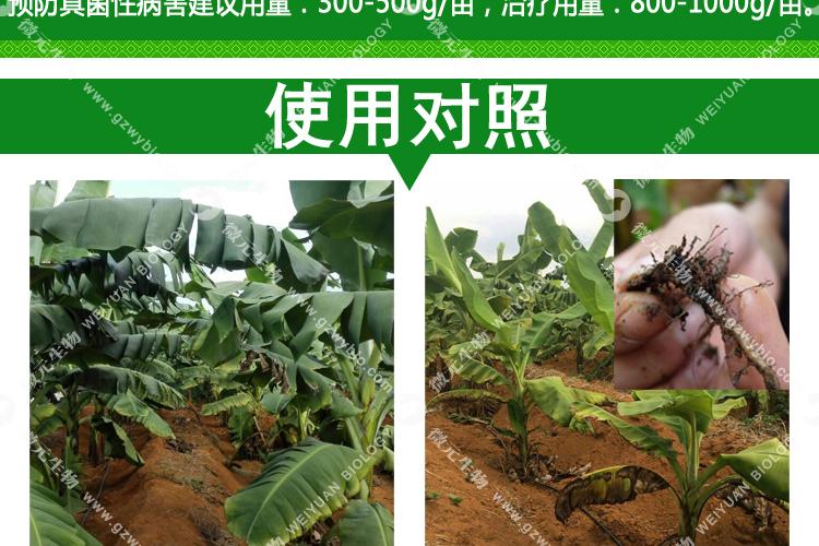 淡紫拟青霉菌依不同作物种类与作物不同时期有不同的使用方式,主要是要让淡紫拟青霉菌浇灌或者灌根与植物根部与土壤中,短期作物使用1-2次,果树花卉等多年生作物每年使用3-4次即可,淡紫拟青霉菌使用次数越多效果越明显,长期使用可有效减少土壤传播性病害发生,多用有益无害。 1.